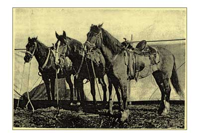 frankshorses2