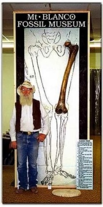 "At the Mount Blanco Fossil Museum, a 47"" femur bone is on display from an archaeological site in Turkey. Well, not exactly. It's the handiwork of the museum's curator, fossil restorationist Joe Taylor, who was ""commissioned to this anatomically correct, and to scale, human femur."" That's right: the real giant femur claimed to have been discovered is just a personal account in a letter. As for photos circulating of a man holding a similar femur bone, you can buy your own exact replica from Taylor for the special price of $450"